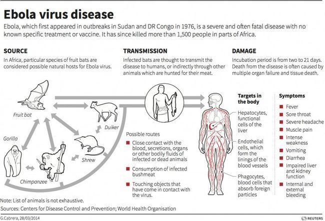 Las causas de Ébola