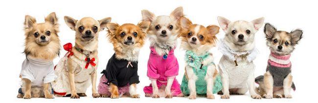 Ropa de colores para los animales domésticos