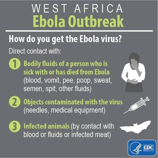 La transmisión del virus del Ébola