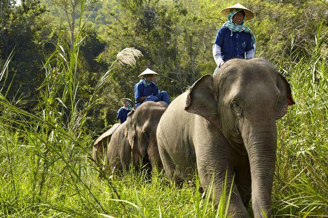 Cuando sus vacaciones es cuidar de sí mismo y elefantes