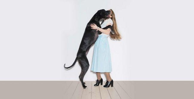 Razona mascota un perro grande