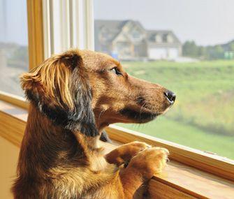 La ansiedad por separación en perros
