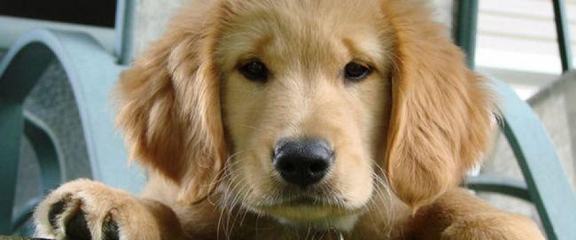 Consejos para el primer examen de su cachorro