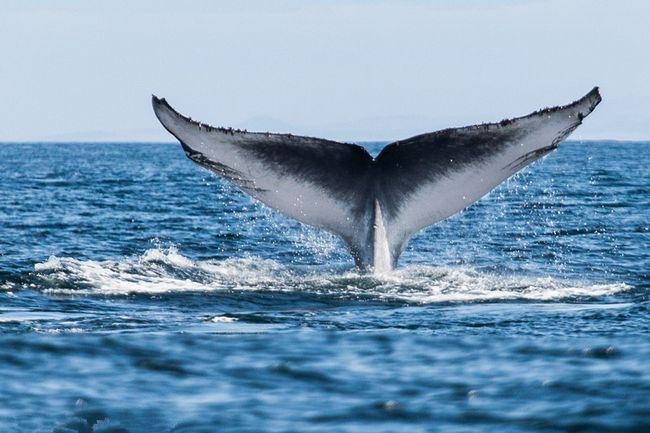 Tipos de ballenas