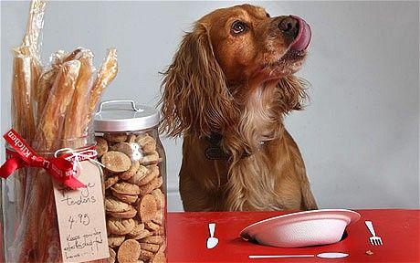 Cuidado con los seis nutrientes en los alimentos para perros