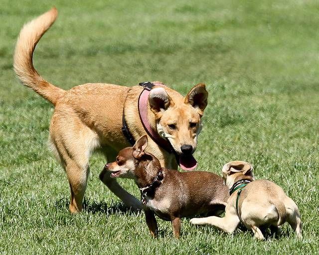 Maneras de ayudar a su perro y jugar bien juntos paisaje