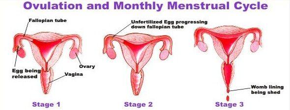 ¿Por qué las niñas tienen períodos