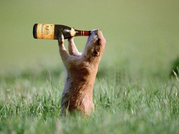 Palabras celebridades dicen que cuando bebían